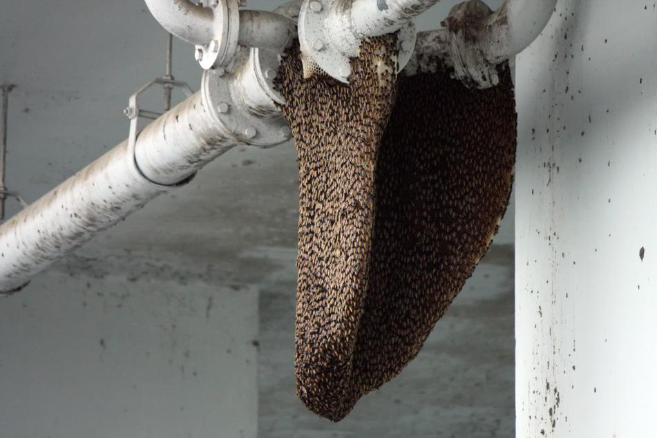 """Bienen machen es sich immer wieder an oder in Häusern """"gemütlich"""". (Symbolbild)"""