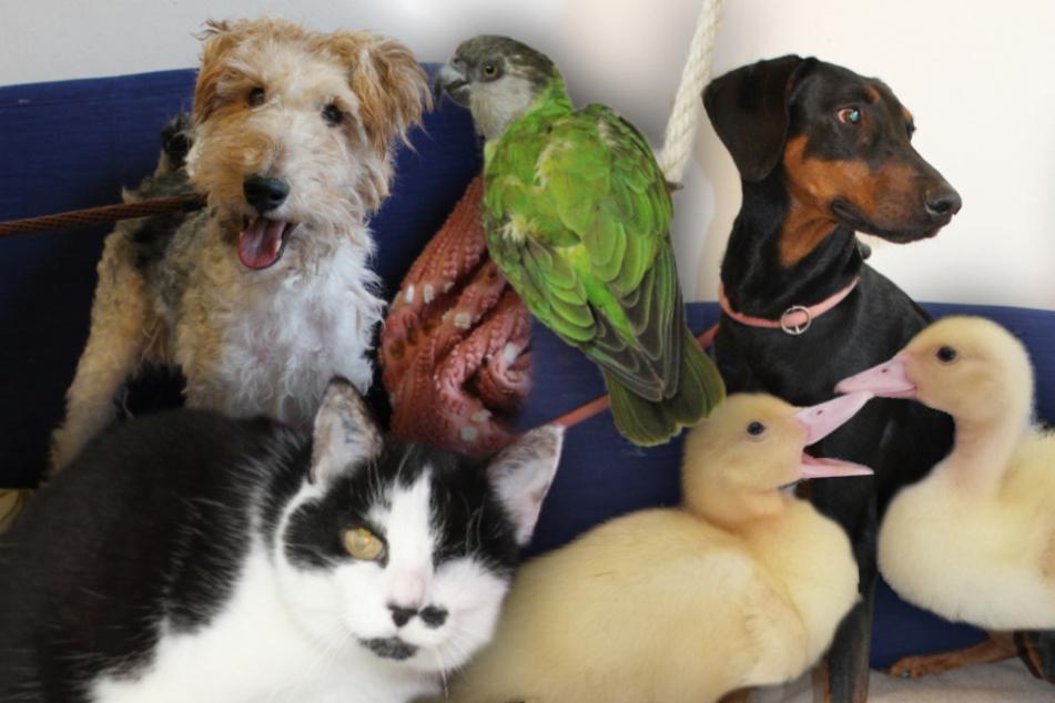 6 besondere Tiere: Hunde, Katze, Papagei und Enten suchen ein Zuhause
