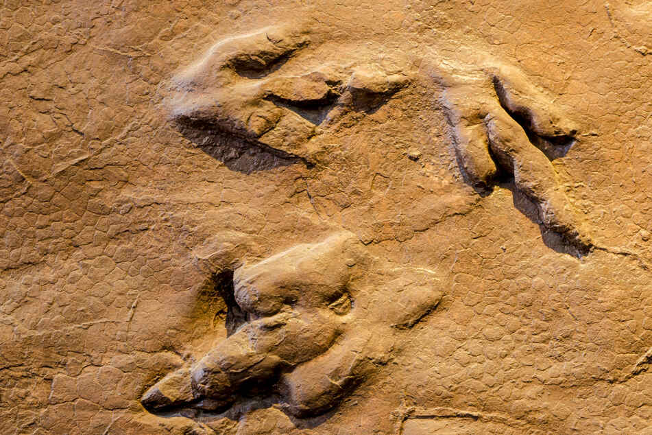 Fossils of the creatures that roamed the Earth millions of years ago have enthralled science lovers and paleontologists.