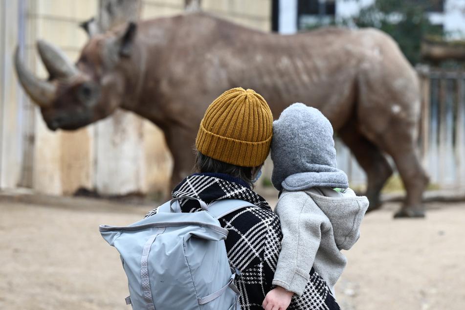 Eine Besucherin beobachtet im Frankfurter Zoo zusammen mit ihrem Kind ein Nashorn in seinem Außengehege.