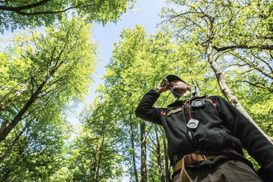 Bestandsaufnahme: Im waldarmen NRW werden zum vierten Mal Bäume gezählt