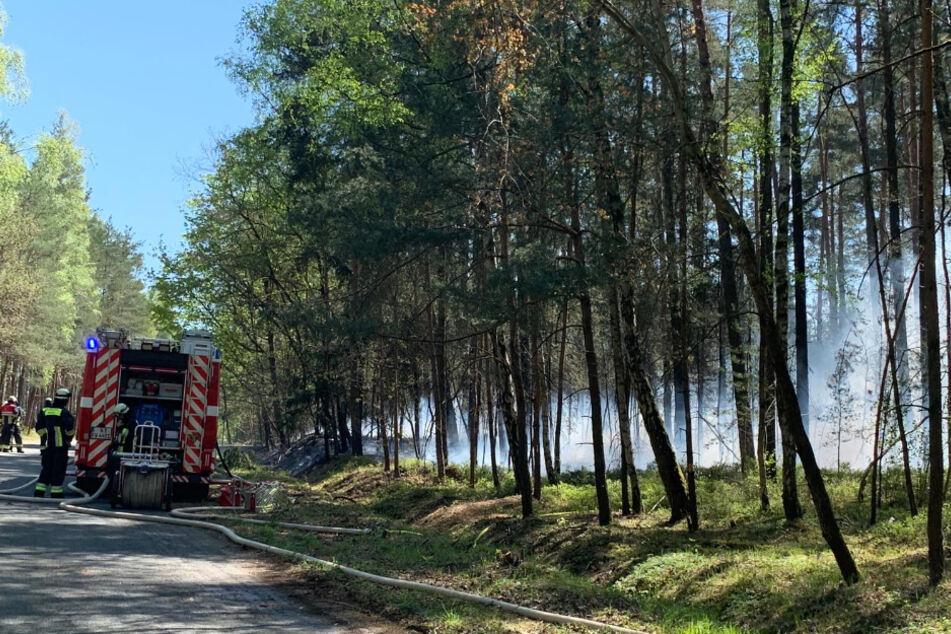 Großeinsatz der Feuerwehr in Nürnberg: Wald brennt!