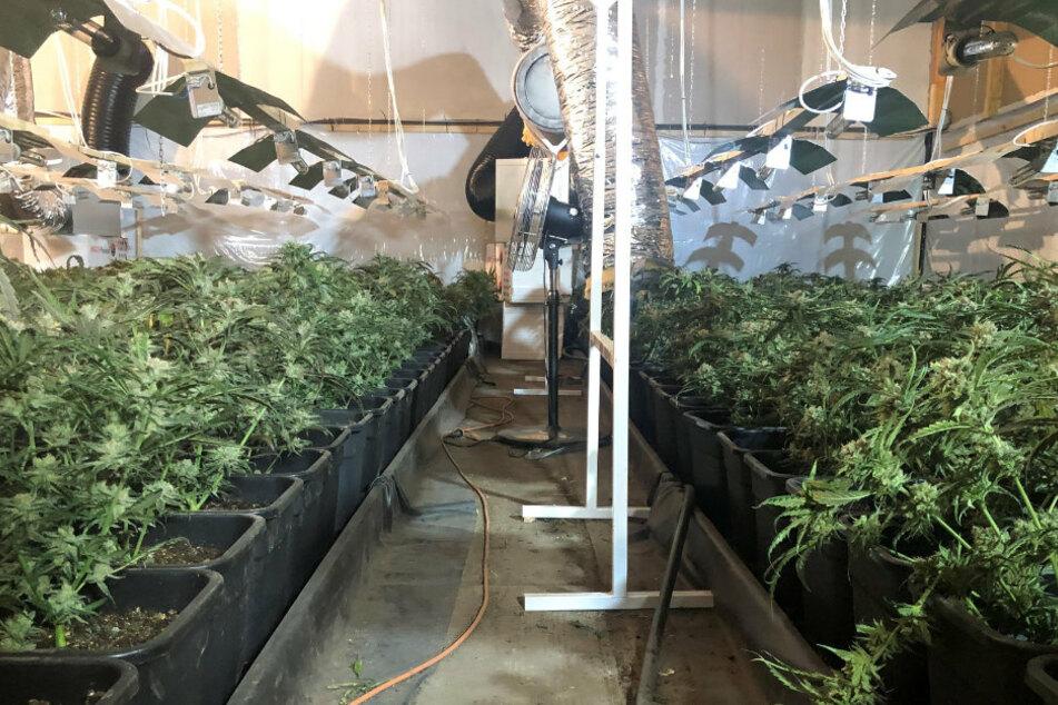 In dem Gewerbegebiet in Wiesenburg wurden mehr als 2.000 Cannabispflanzen sichergestellt.