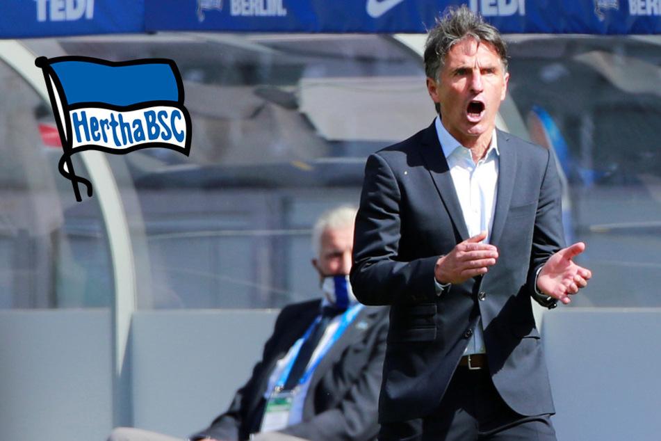 Führt der beste Bruno Labbadia aller Zeiten Hertha in die Europa League?