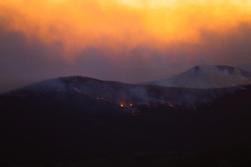 Ein Buschfeuer brennt im Orroral Valley, südlich der australischen Hauptstadt. Mithilfe der Ziegen soll das Risiko auf derartige Brände in Zukunft eingedämmt werden.