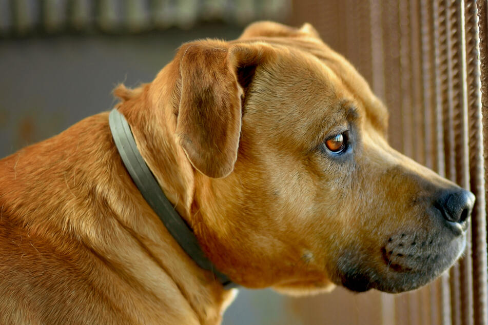 Aisha Nieves sah einen ganz besonderen Hund auf einem der Tierheim-Fotos (Symbolbild).