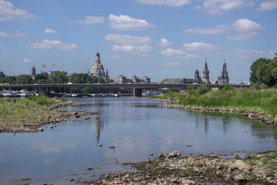 Ausgetrocknet: Viel Sonne und wenig Regen haben Dresdens Elbufer empfindliche Trocknungsrisse eingeschrieben. Das sächsische Umweltministerium will nun die Klimafolgen mit einer Langfrist-Strategie abfedern.