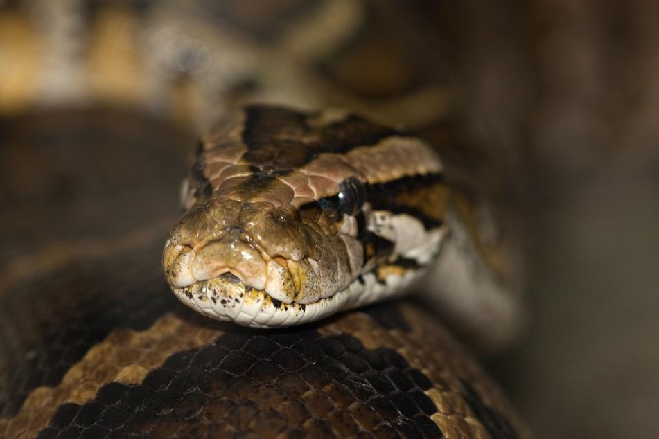 An einer Landstraße im Ilm-Kreis wurde am Freitag eine tote Schlange gefunden. (Symbolbild)