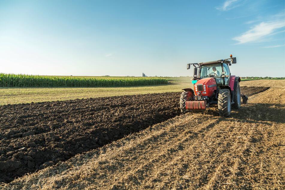 """""""In der Landwirtschaft müssen wir auf Sorten setzen, die mit diesen starken Temperatur- und Feuchtevariationen zurechtkommen"""", sagt Forscherin Jacob. (Symbolbild)"""