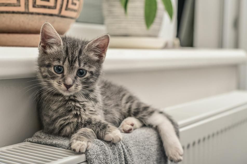 Eine Decke ist keine wirkliche Alternative, um die Katze auf der Heizung zu schützen, denn die kann wegrutschen.