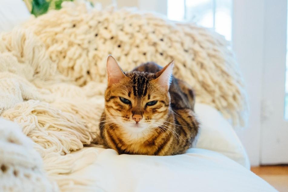 Aggressives Verhalten lässt sich oft schon im Keim ersticken, wenn man versteht, was gerade in der Katze vorgeht.