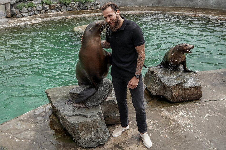 Marco Höger (30) beim Pressetermin am Donnerstagmittag mit Seelöwen im Kölner Zoo.