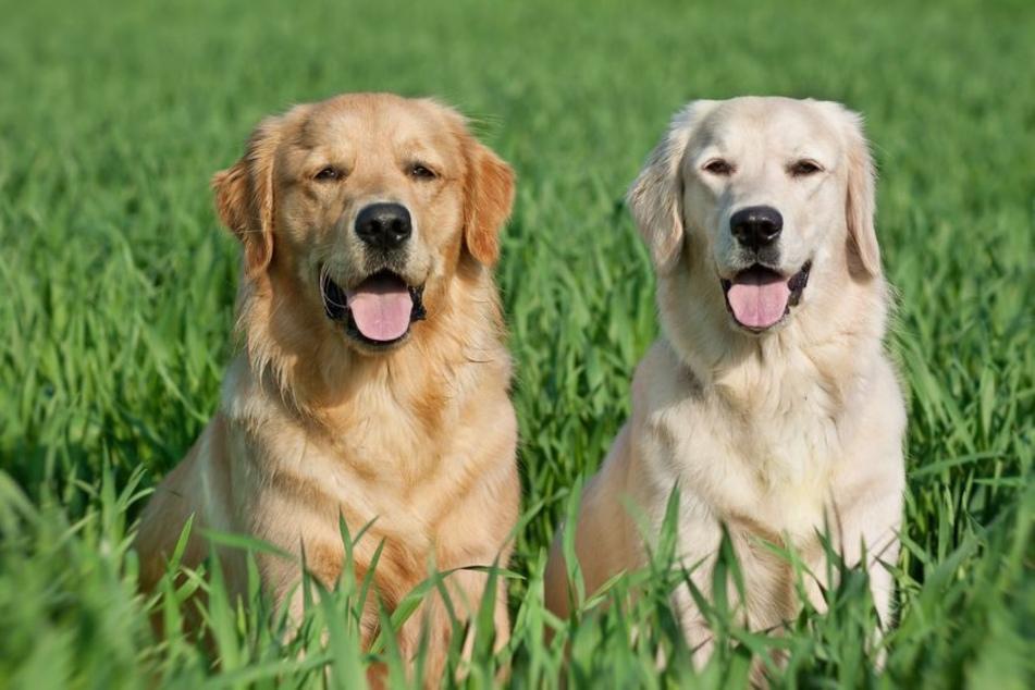 1 Hundejahr entsprechen 7 Menschenjahren? Forscher halten das für falsch!