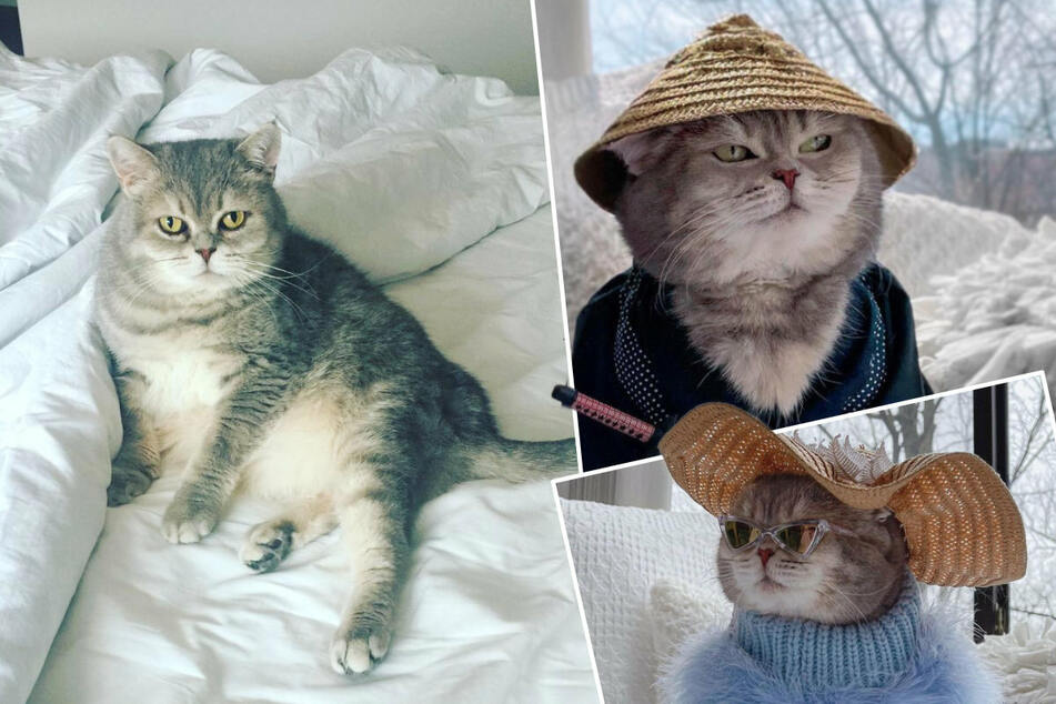 Cat in a hat: Kitten rescued on vacation now has a new home and a modeling career!