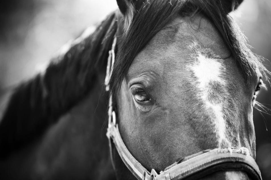 Das Pferd wurde bei dem Angriff schwer verletzt. (Symbolbild)