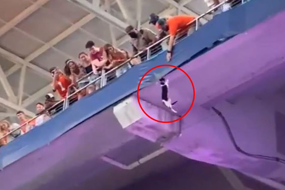 Eine Katze hing im Hard Rock Stadium über dem Abgrund.