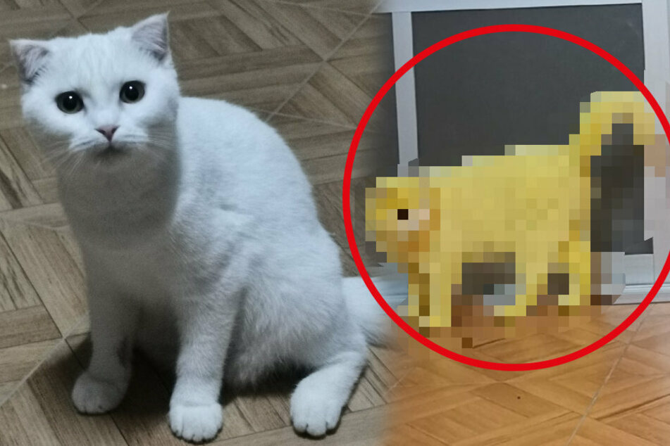 Pika(t)chu: cat gets yellow dye-job and a huge internet following