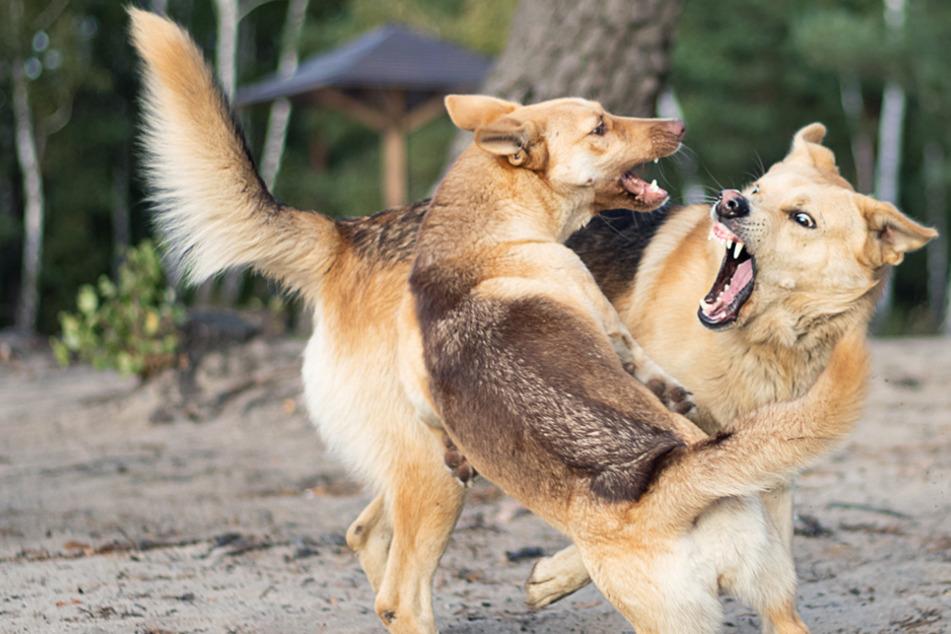 Hund attackiert Frau und deren Hund: Beide verletzt!