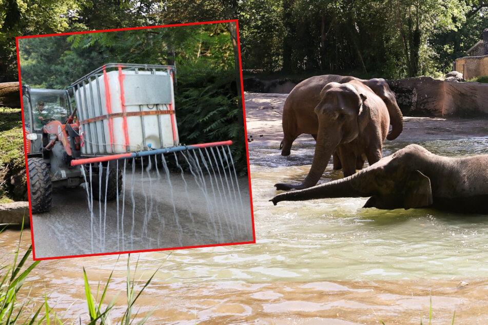 Shitstorm für Tierpark Hagenbeck! Dieses Bild macht viele Besucher wütend