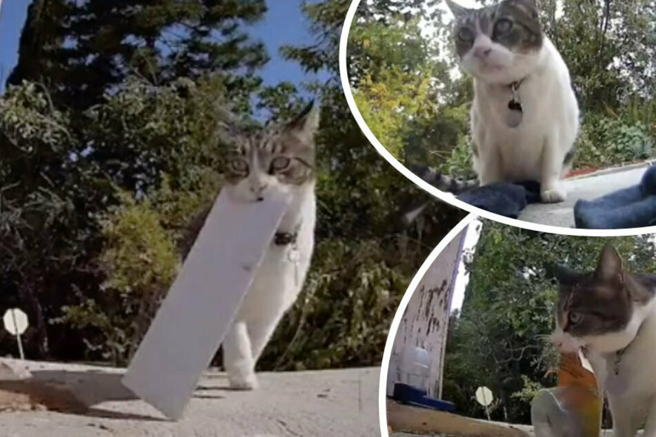 This cat snitches up everything from letters (l), socks (top right) to garbage.