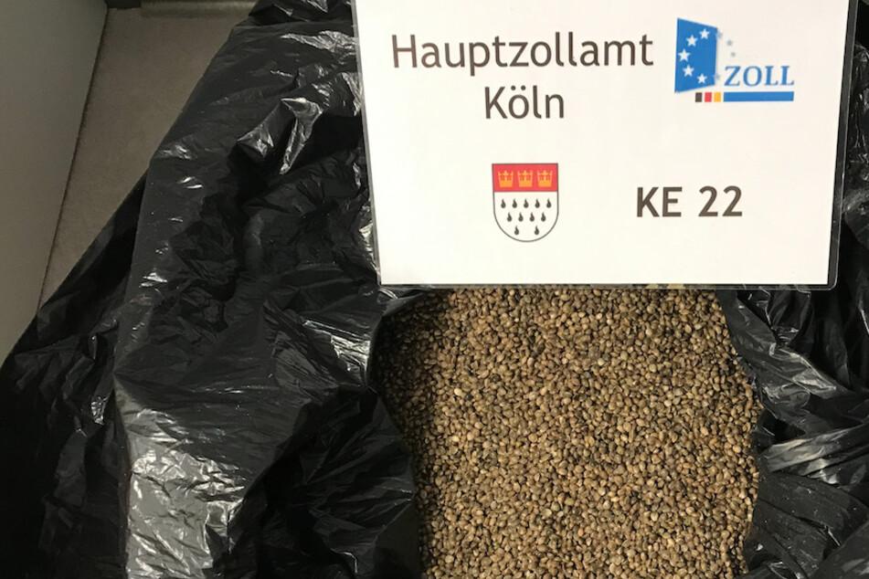Der Zoll in Köln beschlagnahmte rund 50 Kilogramm Cannabis-Samen.