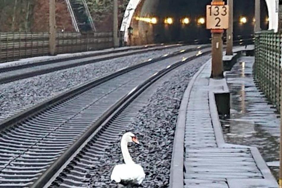 Auf der Bahnstrecke zwischen Kassel und Göttingen sorgte ein Schwan für einen Einsatz der Feuerwehr.