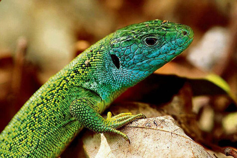 Virengefahr! PETA fordert Verbot von Reptilienbörsen