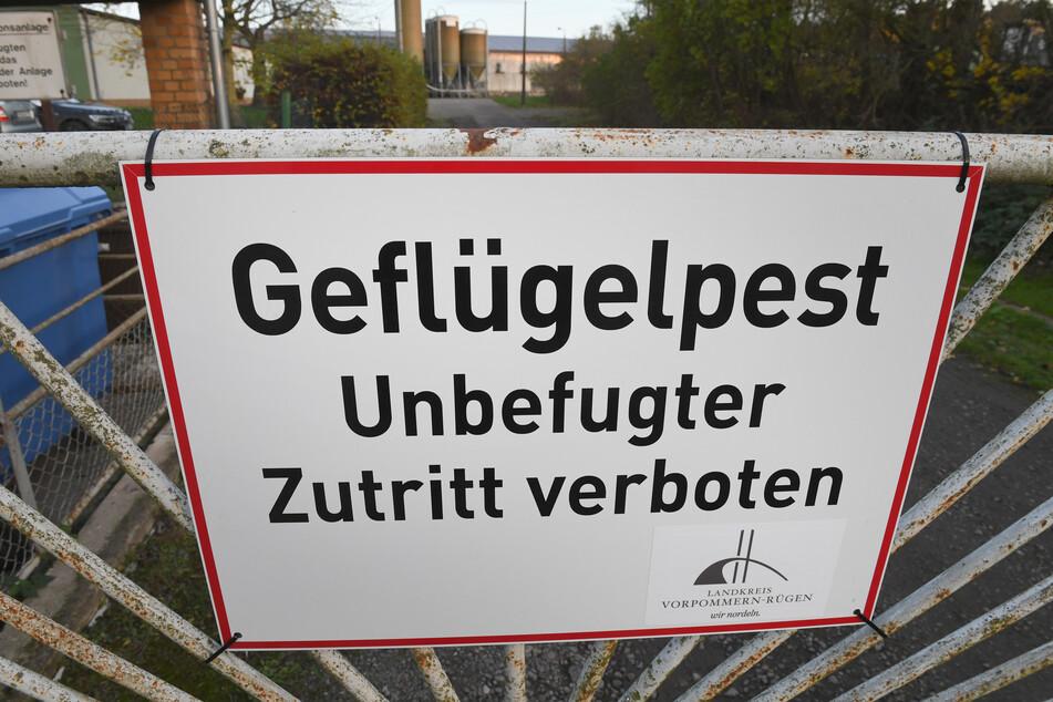 Geflügelpest-Ausbruch in Niedersachsen, Tausende Tiere getötet