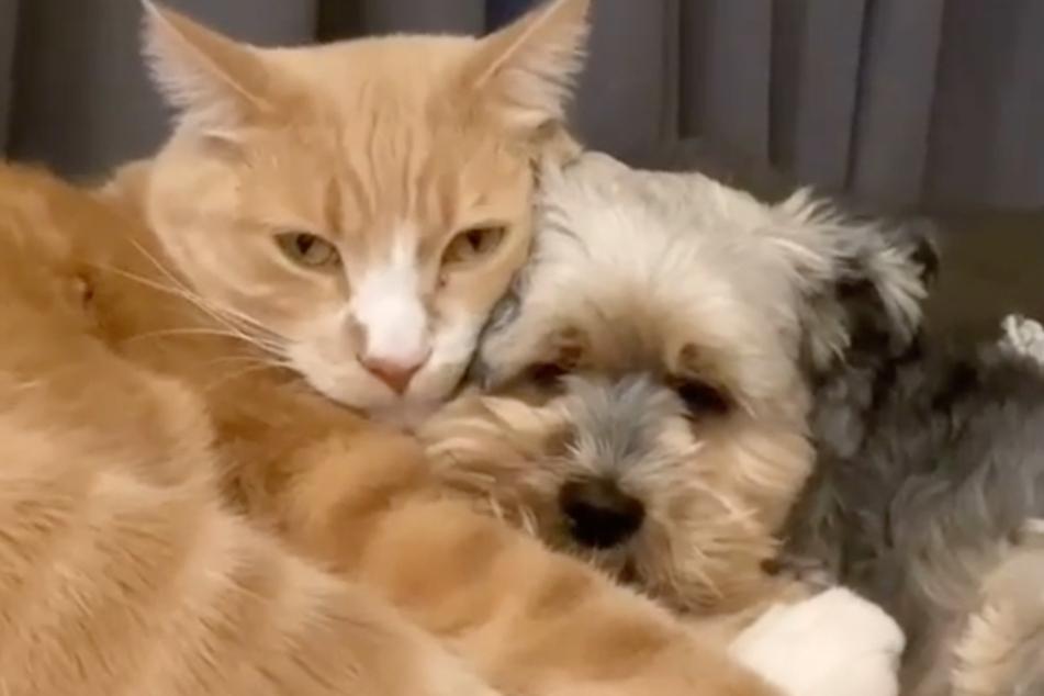 Kater Conan und sein bester Hunde-Freund Sarge kuscheln miteinander und lassen damit die Herzen von Tierfans höher schlagen.