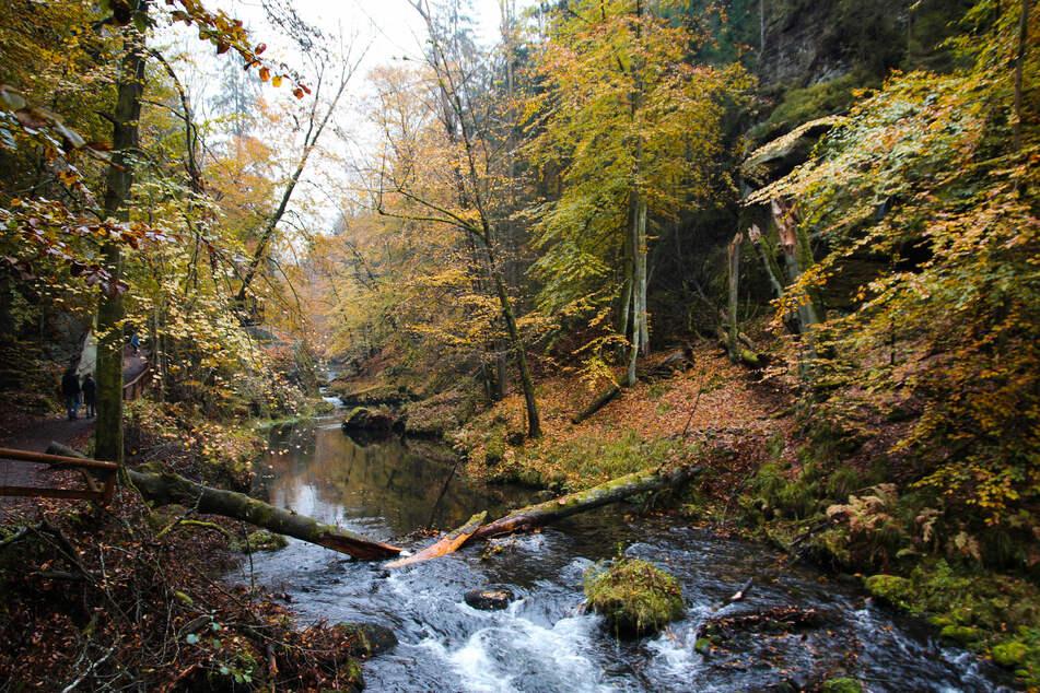 Trotz regnerischem Wetter lädt die Natur zu einem Herbstspaziergang ein. (Symbolbild)