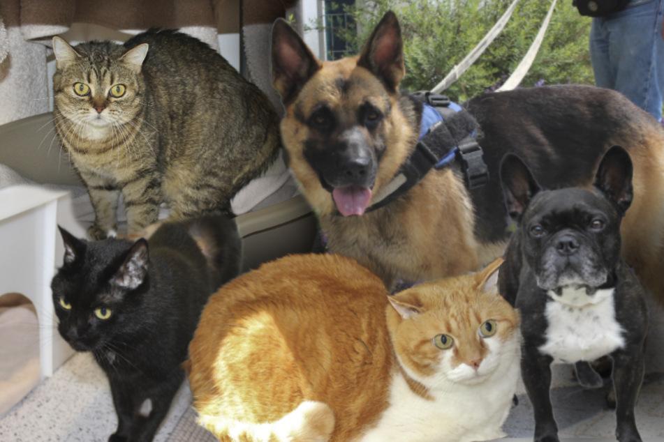 5 besondere Tiere: Warum will niemand diese Hunde und Katzen haben?