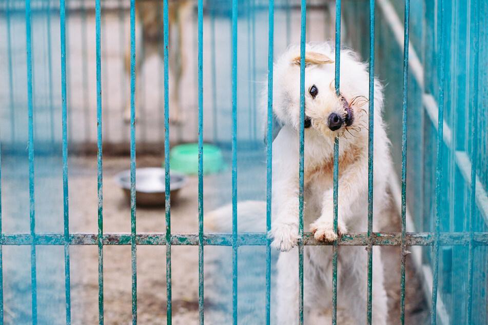 2,50 Euro: Gerichtsvollzieher beschlagnahmen Hunde und verkaufen sie online