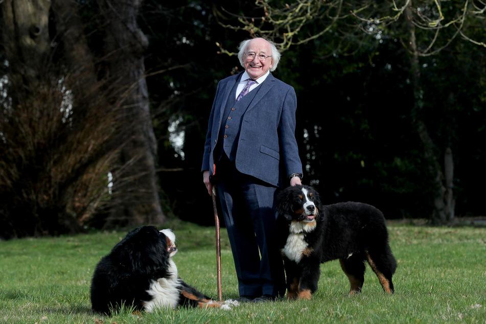 Michael D. Higgins (79), Präsident von Irland, mit seinem neuen Berner Sennenhund Misneach (r.) und dem älteren Hund namens Bród.