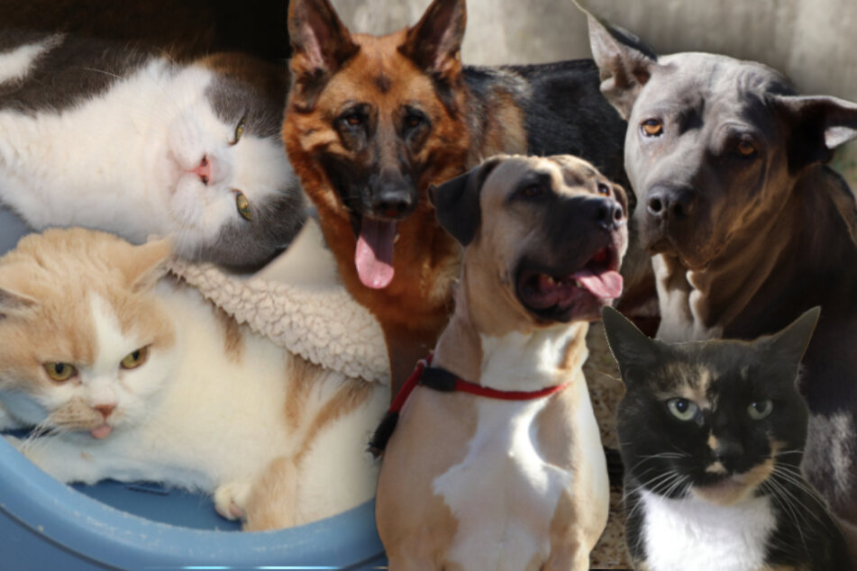 München: 6 besondere Tiere: Diese Hunde und Katzen suchen endlich ein neues Zuhause