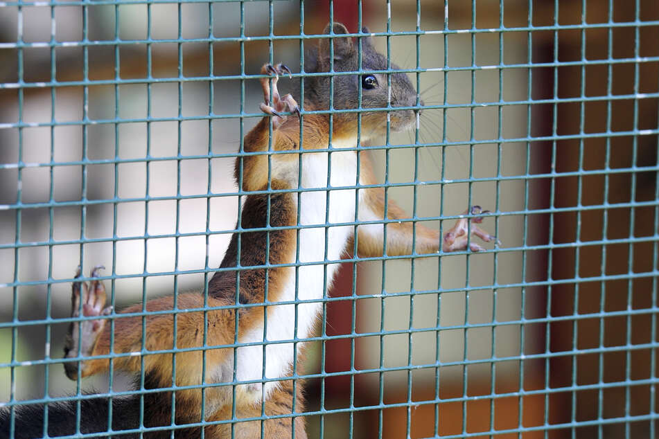 Die flinken Streifenhörnchen sind besonders bei Kindern beliebt.