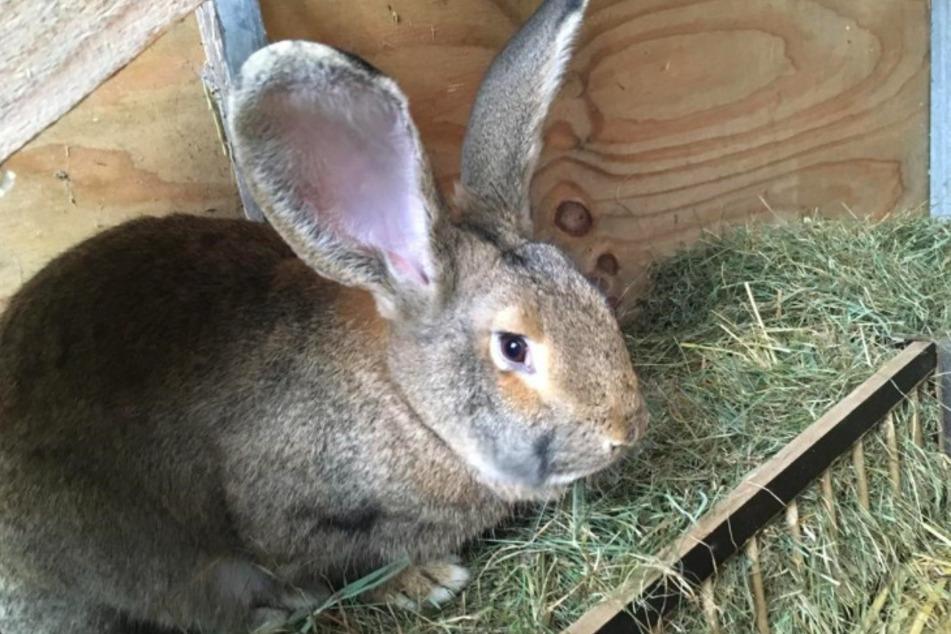 Kaninchen Klara.