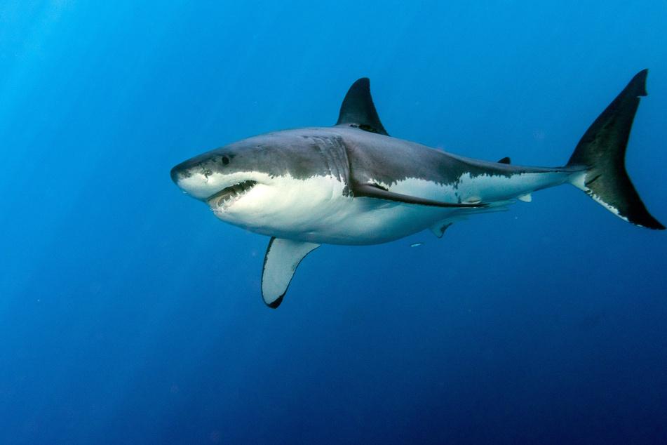 Shark attacks 9-year-old boy bodysurfing in Miami Beach