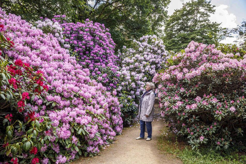 Der Rhododendronpark in Schlossnähe.