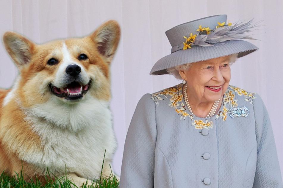 Nach dem Tod ihres Hundes: Die Queen bekommt ein tierisches Geburtstags-Geschenk