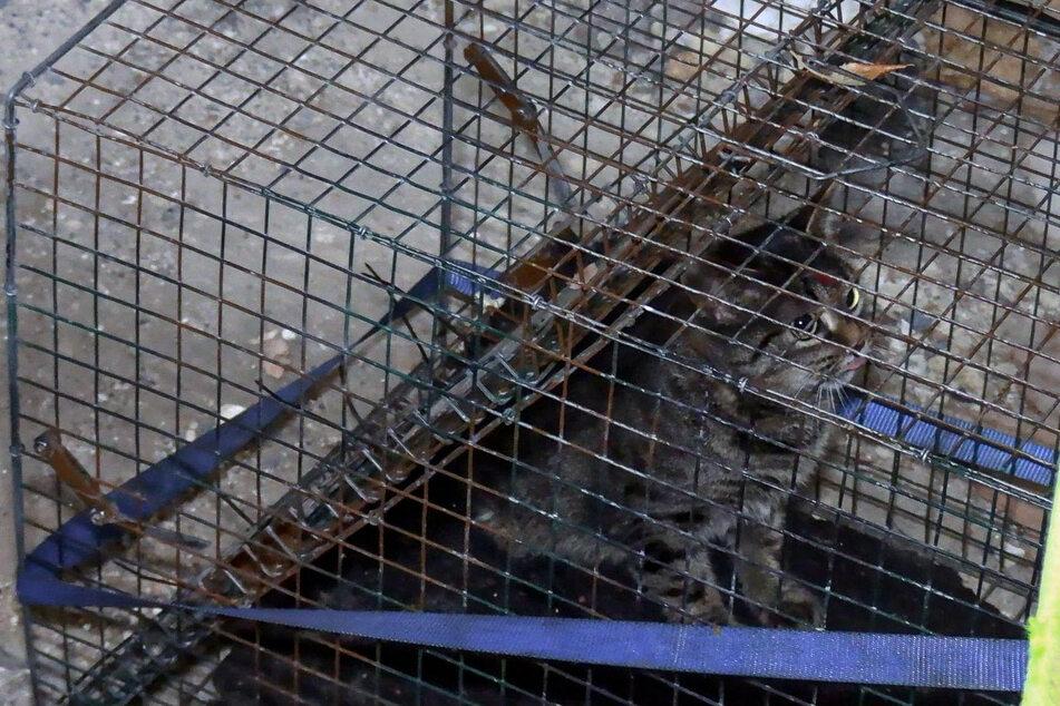 Katze Bonny konnte mit einer Lebendfalle aus dem explodierten Haus in Wuppertal gerettet werden.