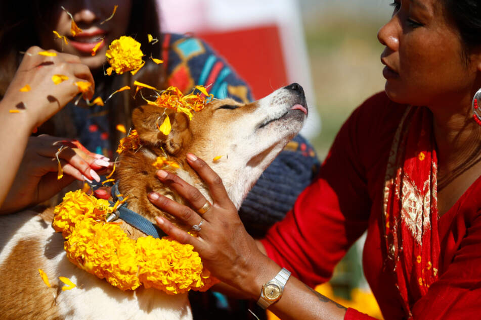 Irres Hundefest: Hier werden die Vierbeiner wie Götter verehrt