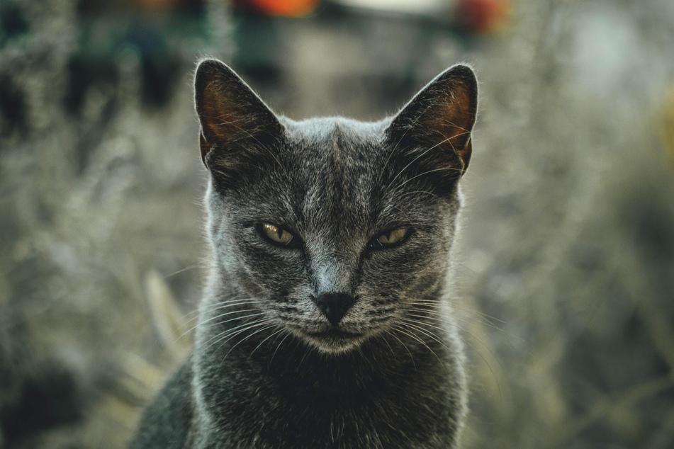 Die Laune von Katzen kann sich innerhalb kürzester Zeit verändern.