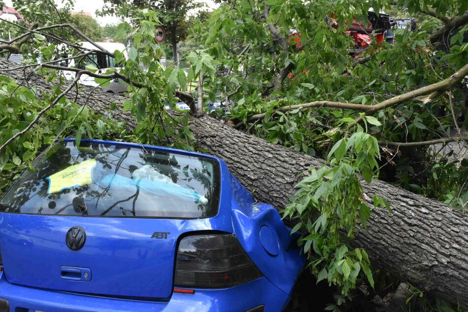Der Baum stürzte direkt auf einen geparkten Volkswagen. Am Auto entstand Totalschaden.