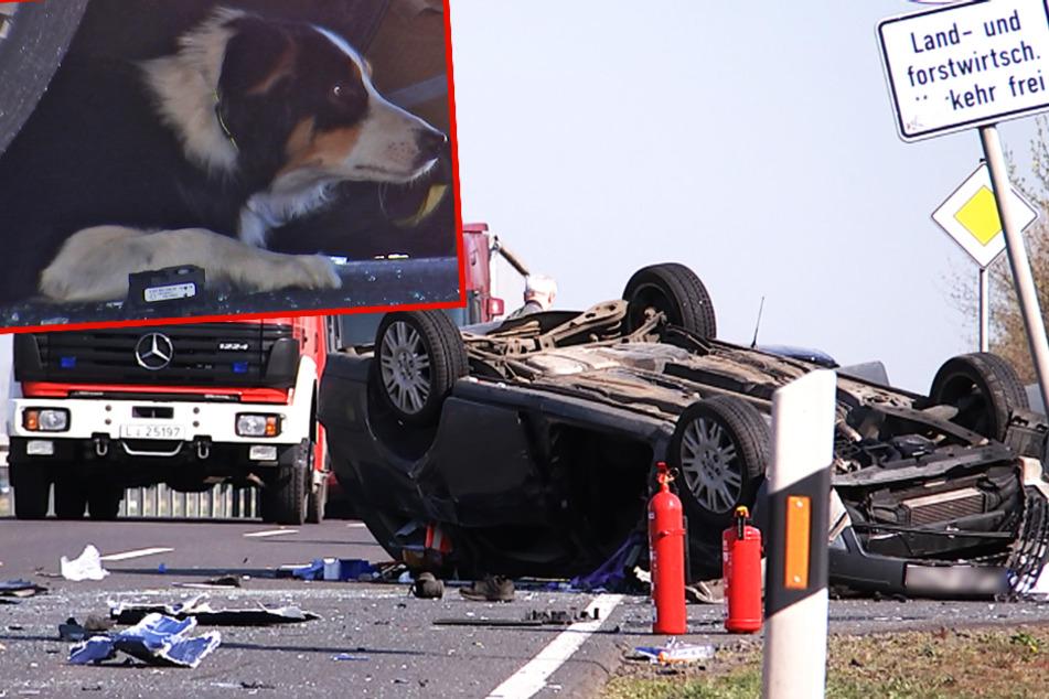 Heftiger Überhol-Unfall bei Leipzig: Ford-Fahrer eingeklemmt, Hund gerettet