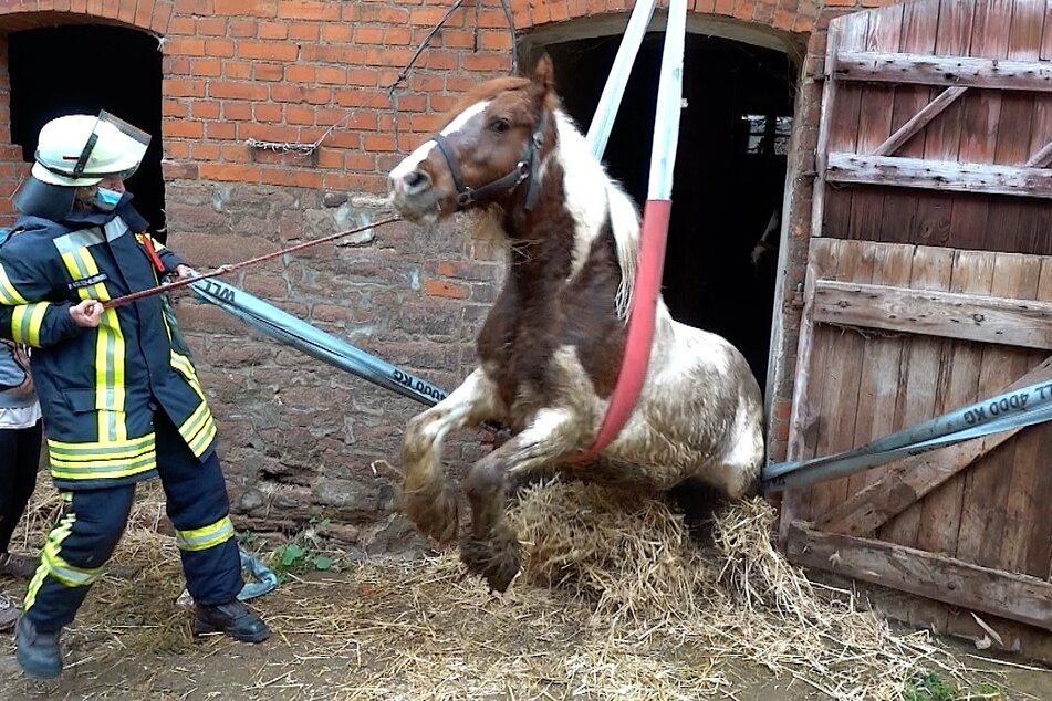 Mit einer Schlaufe wurde das Tier von der Feuerwehr geborgen.