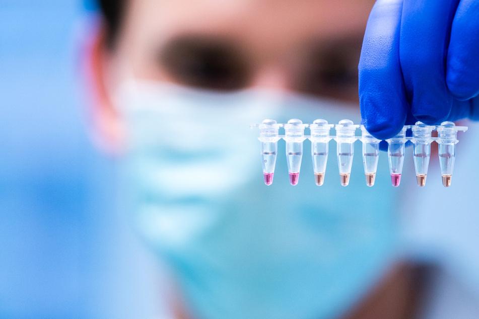 Ein Labor-Mitarbeiter untersucht Proben auf mögliche Coronavirus-Infektionen.