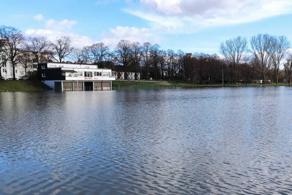 Die Sportanlage Poller Wiesen: Der Rasen wurde im Laufe der letzten Tage durch das Rhein-Hochwasser überflutet.