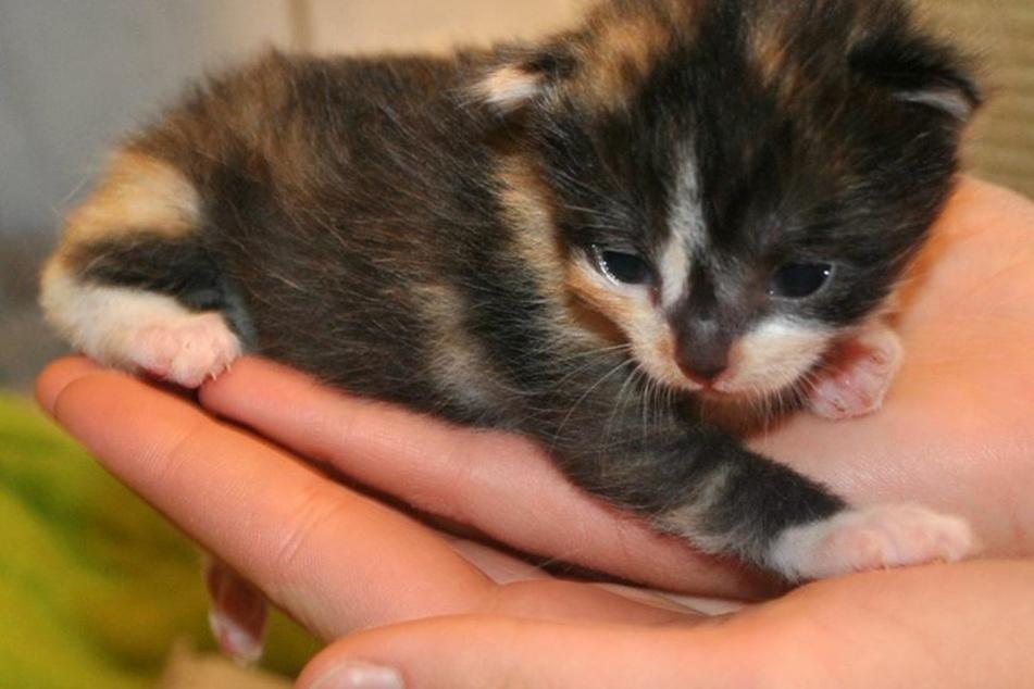 Zuckersüß: Einsames Katzenbaby findet nach Rettung neue Mutter