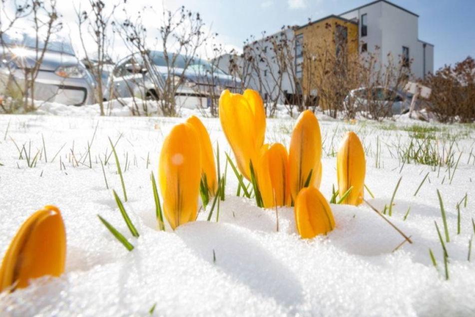 Das Wetter spielt verrückt! März kälter als der Dezember
