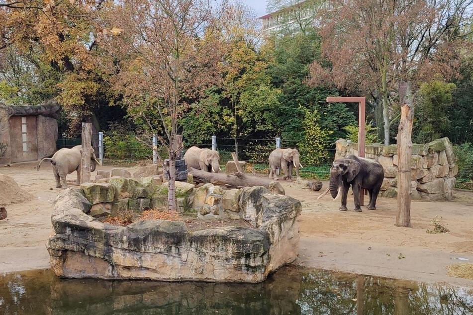 Der Zoo Dresden plant eine Erweiterung des Elefantengeheges.